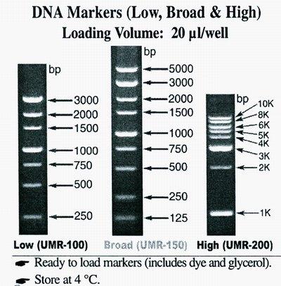 Gt Dna Markers Biotang Inc