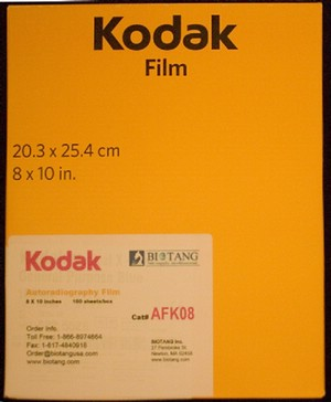 KODAK* AUTORADIOGRAPHY FILM, 8 X 10'', 100 sheets