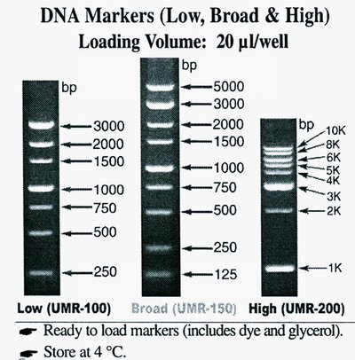 DNA MARKER (HIGH RANGE)1 KILO BASE PAIR LAD 2 ml